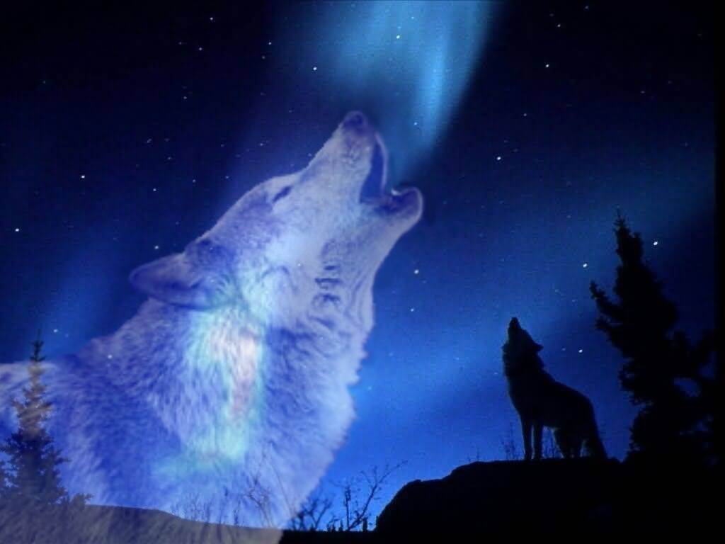 pics of wolves howling at the moon | wolf howling at the moon