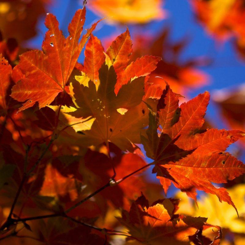 10 Most Popular Fall Leaves Desktop Wallpaper FULL HD 1920×1080 For PC Desktop 2020 free download %name