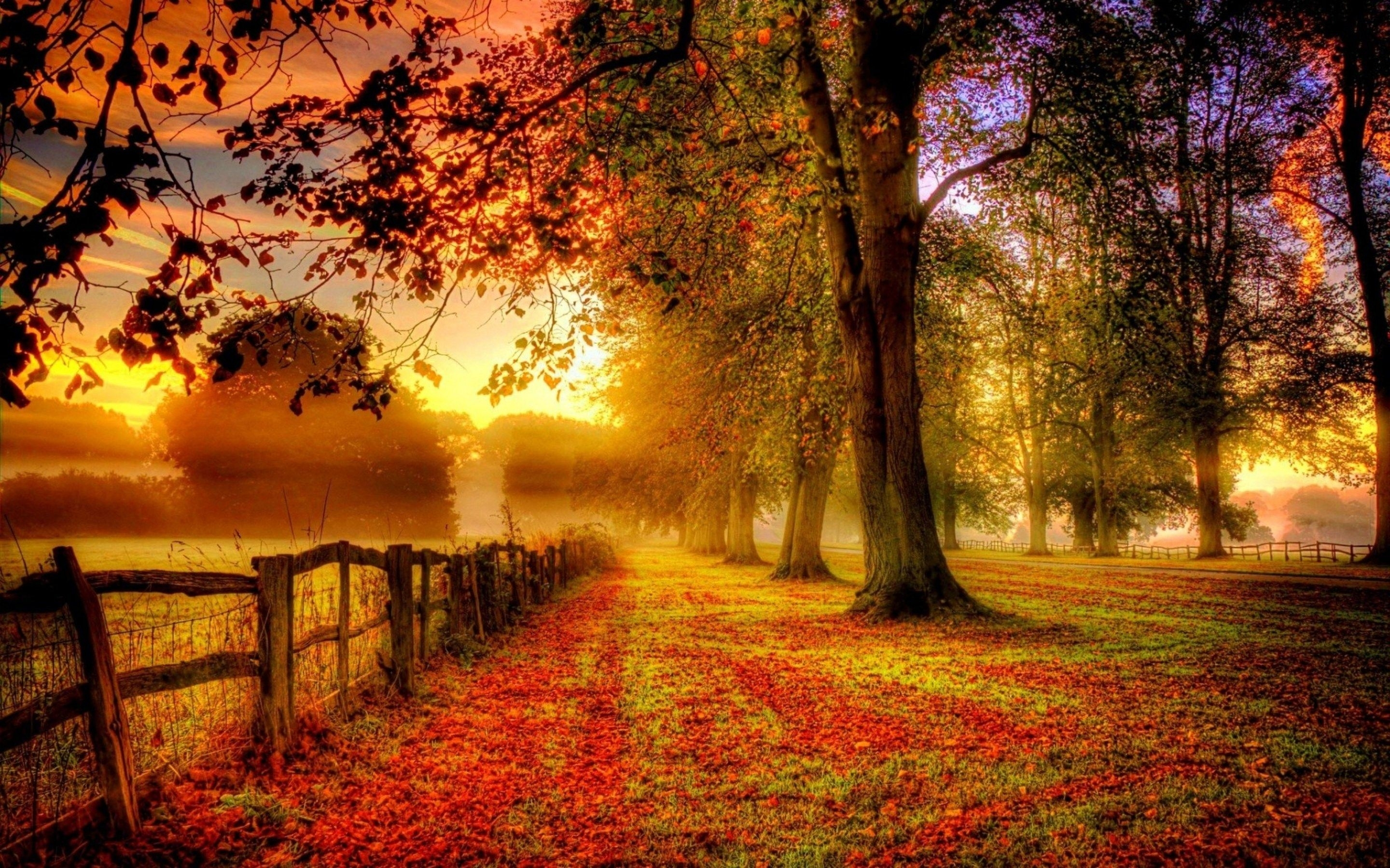 picturesque landscape colorful fall fog morning wide hd wallpaper