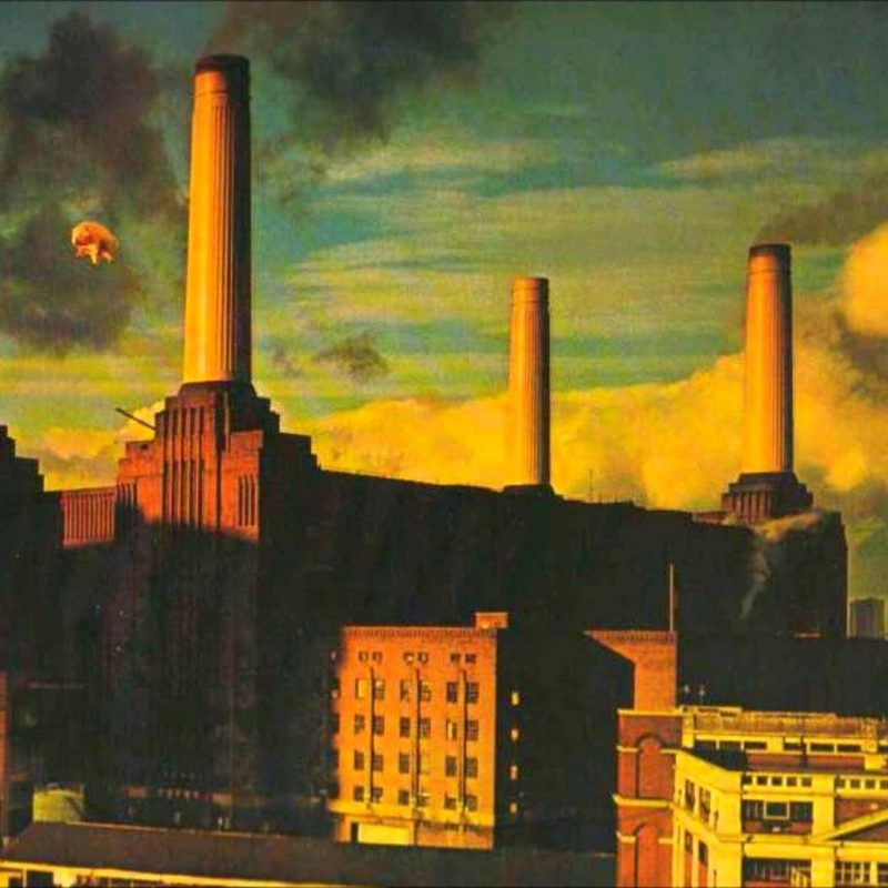 10 Most Popular Pink Floyd Animals Wallpaper FULL HD 1920×1080 For PC Background 2018 free download pigs three different ones pink floyd animals 1977 cover youtube 800x800