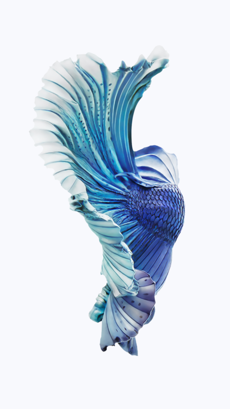 10 New Iphone Fish Wallpaper FULL HD 1920×1080 For PC Background 2021 free download pin en iphone wallpapers 450x800