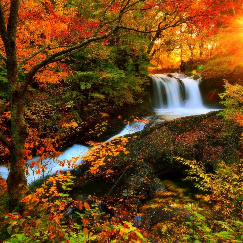 10 Best Beautiful Fall Scenery Images FULL HD 1080p For PC Desktop 2018 free download pind0bbd0b5d0bbd18f d0b2d0b5d181d0bdd0b0 on d0bed181d0b5d0bdd18c pinterest beautiful scenery sunlight 800x800