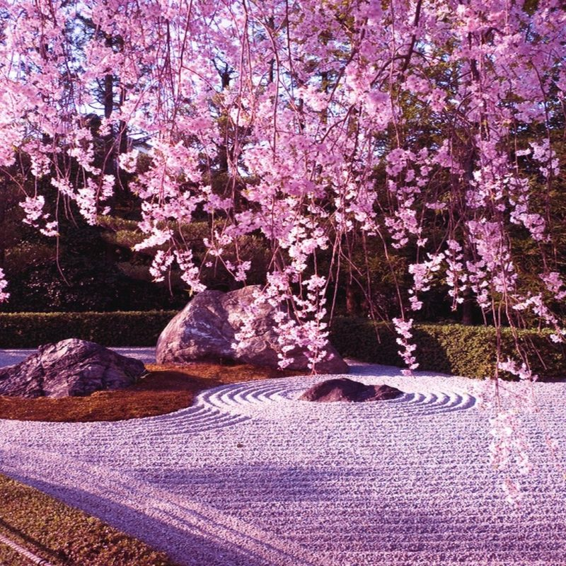 10 Most Popular Cherry Blossom Wallpaper Desktop 1920X1080 FULL HD 1920x1080 For PC Background
