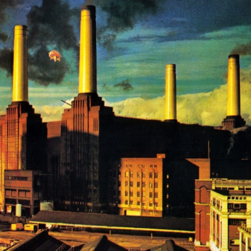 10 Most Popular Pink Floyd Animals Wallpaper FULL HD 1920×1080 For PC Background 2018 free download pink floyd fond decran and arriere plan 1024x768 id4304 800x800