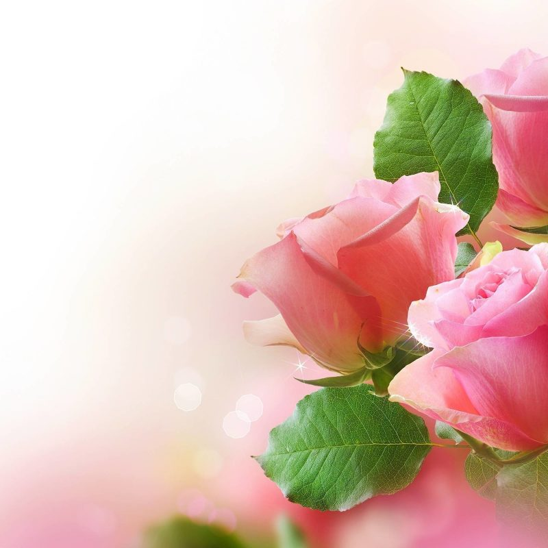 10 New Light Pink Rose Background FULL HD 1920×1080 For PC Desktop 2018 free download pink rose background c2b7e291a0 800x800