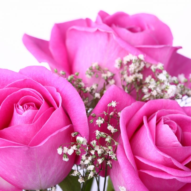 10 Best Pink Rose Wallpaper Hd FULL HD 1920×1080 For PC Background 2021 free download pink rose pictures download free pixelstalk 800x800