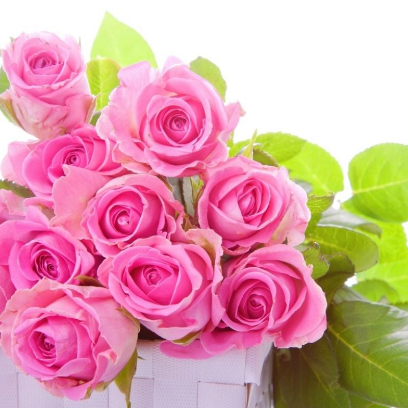 10 Best Roses Wallpapers Free Download FULL HD 1920×1080 For PC Background 2020 free download pink rose wallpapers hd pictures flowers one hd wallpaper 800x800