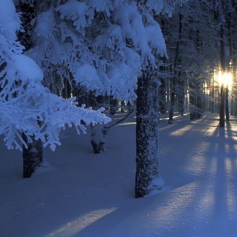 10 Best Winter Forest Wallpaper Hd FULL HD 1080p For PC Background 2018 free download pinmahgee p on photographs pinterest winter snow tree 800x800