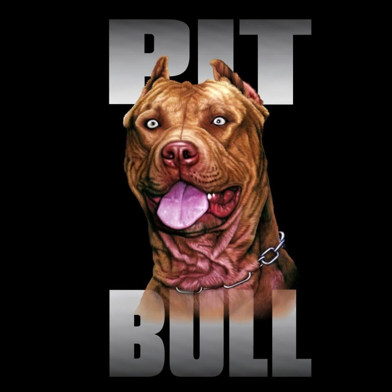 10 New Wallpaper Of Pit Bulls FULL HD 1080p For PC Desktop 2018 free download pit bulls wallpapers wallpaper cave 800x800