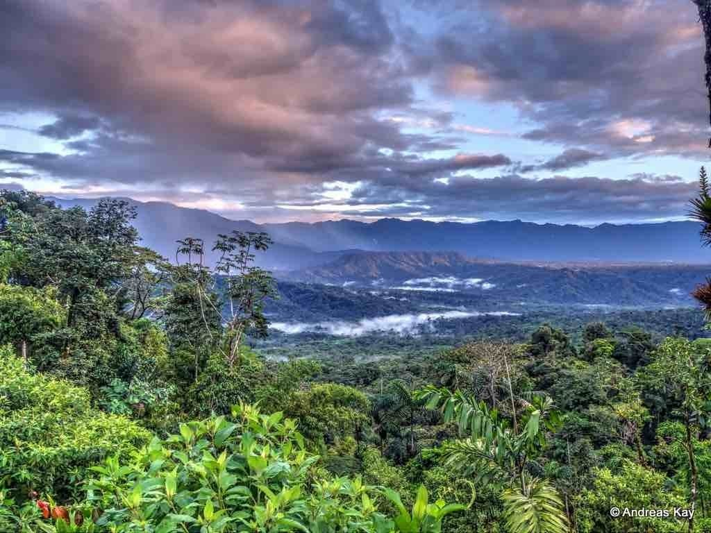 10 Most Popular Pictures Of The Amazon Rainforest FULL HD 1080p For PC Background 2018 free download planting positive change with 73 million more trees in amazon 1 1024x768