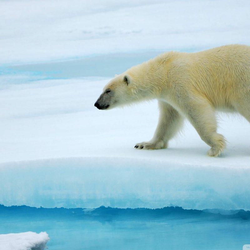 10 Best Polar Bear Desktop Wallpaper FULL HD 1920×1080 For PC Background 2018 free download polar bear e29da4 4k hd desktop wallpaper for 4k ultra hd tv e280a2 wide 800x800
