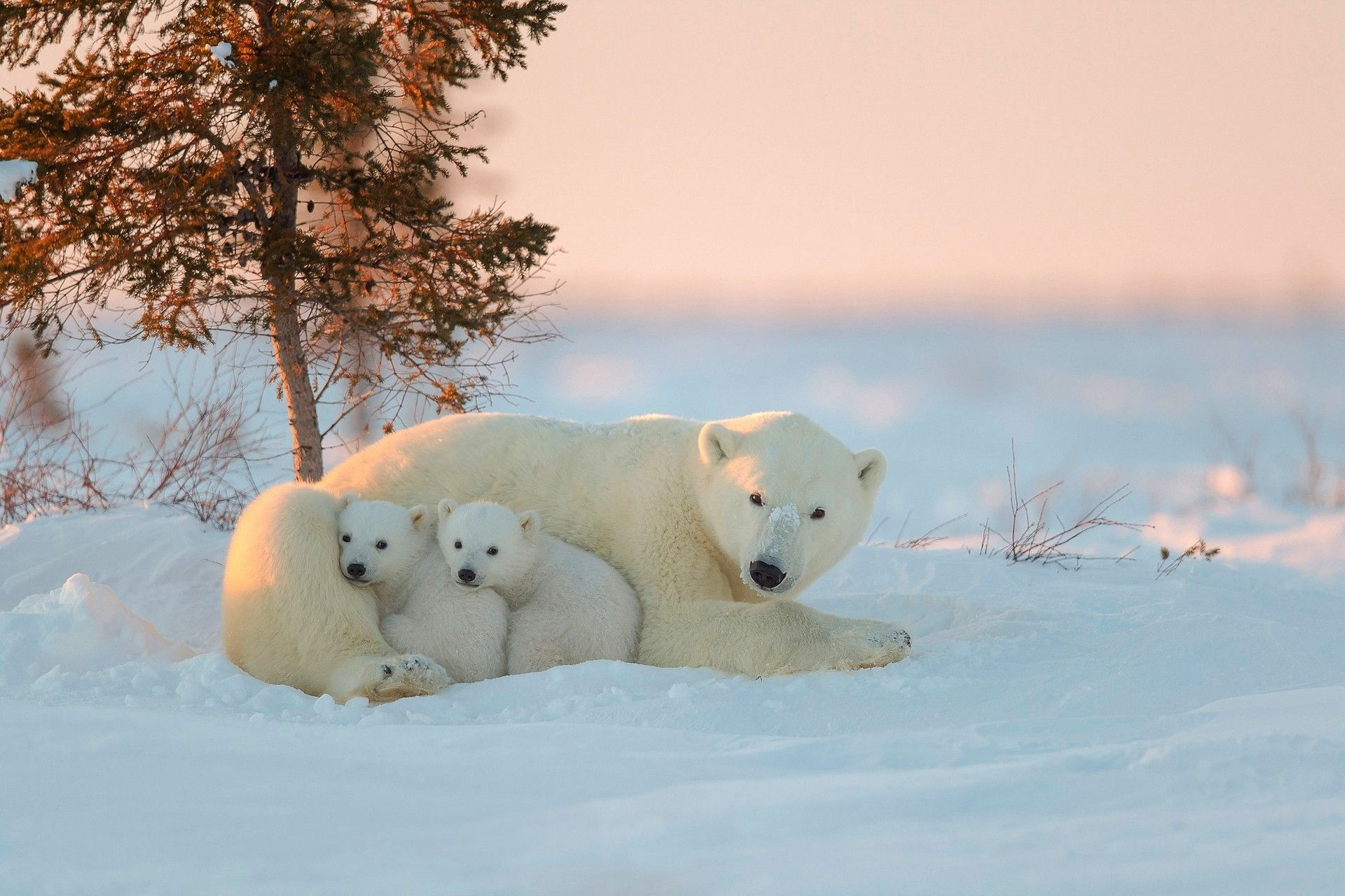 polar bear wallpapers picture | animals wallpapers | pinterest