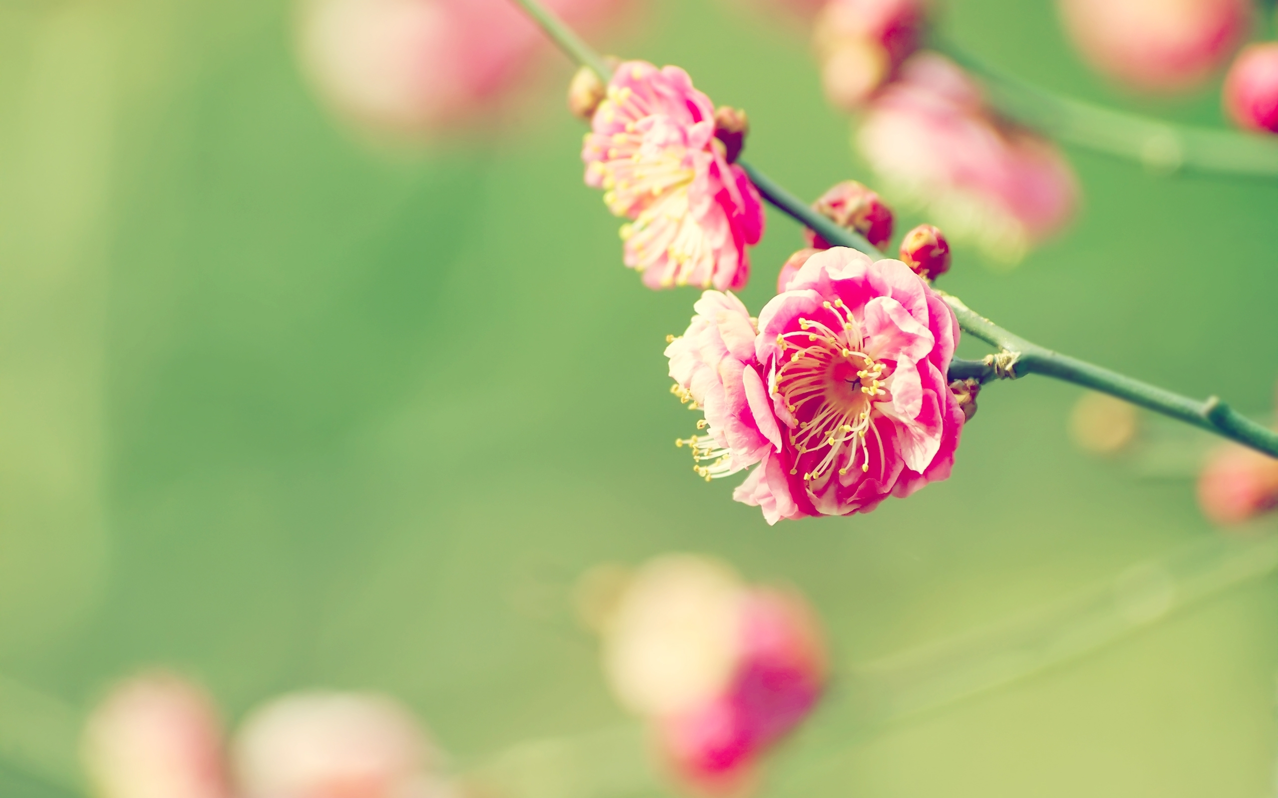 preview spring flowers wallpaper | feelgrafix | pinterest