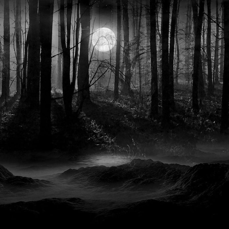 10 Latest Forest Full Moon Wallpaper FULL HD 1920×1080 For PC Desktop 2018 free download profile dark night full moon wallpaper background picture and 800x800