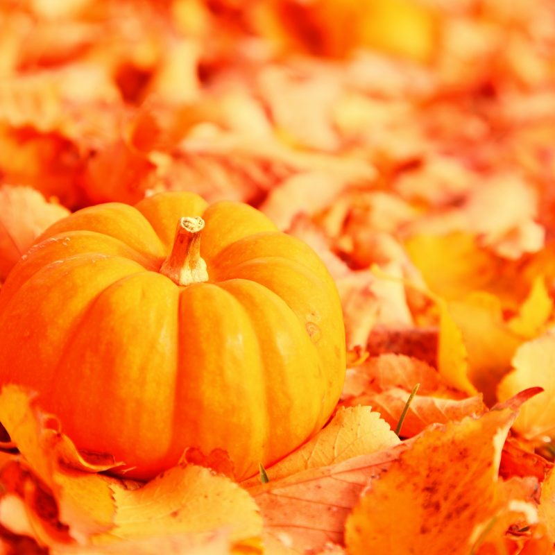 10 Most Popular Fall Leaves Desktop Wallpaper FULL HD 1920×1080 For PC Desktop 2020 free download pumpkin and autumn leaves e29da4 4k hd desktop wallpaper for 4k ultra hd 2 800x800