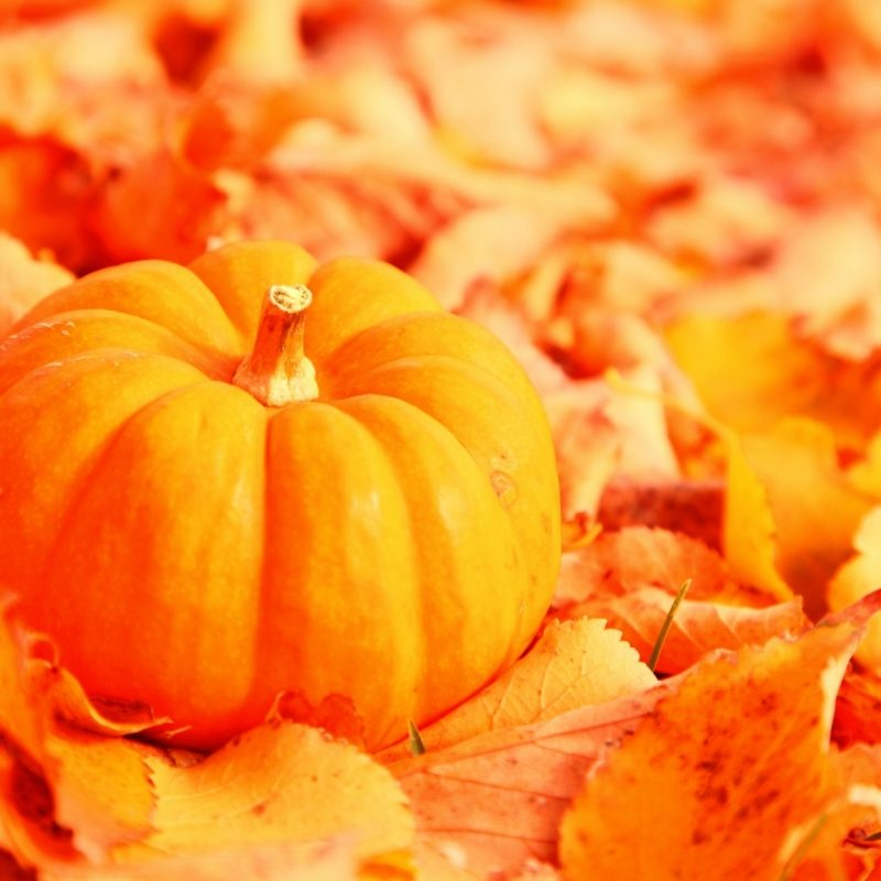 10 Top Fall Pumpkin Computer Backgrounds FULL HD 1080p For PC Desktop 2018 free download pumpkin and autumn leaves e29da4 4k hd desktop wallpaper for 4k ultra hd 800x800