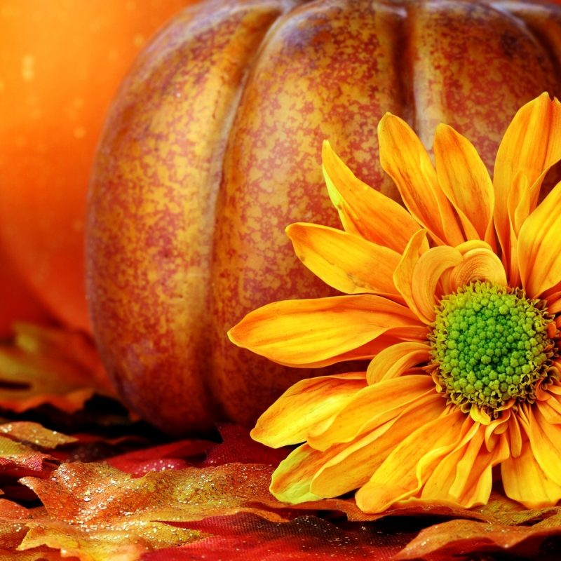 10 Top Fall Pumpkin Computer Backgrounds FULL HD 1080p For PC Desktop 2018 free download pumpkin and flower wallpaper wallpaper wallpaperlepi 800x800