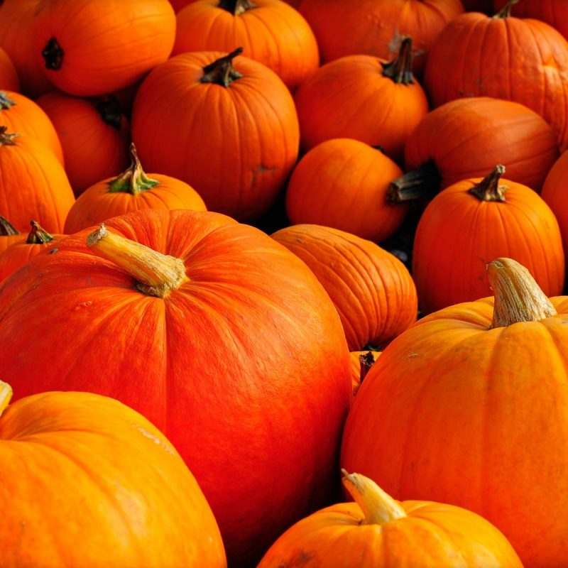 10 Top Fall Pumpkin Computer Backgrounds FULL HD 1080p For PC Desktop 2018 free download pumpkin in high quality hd desktop wallpaper instagram photo 800x800