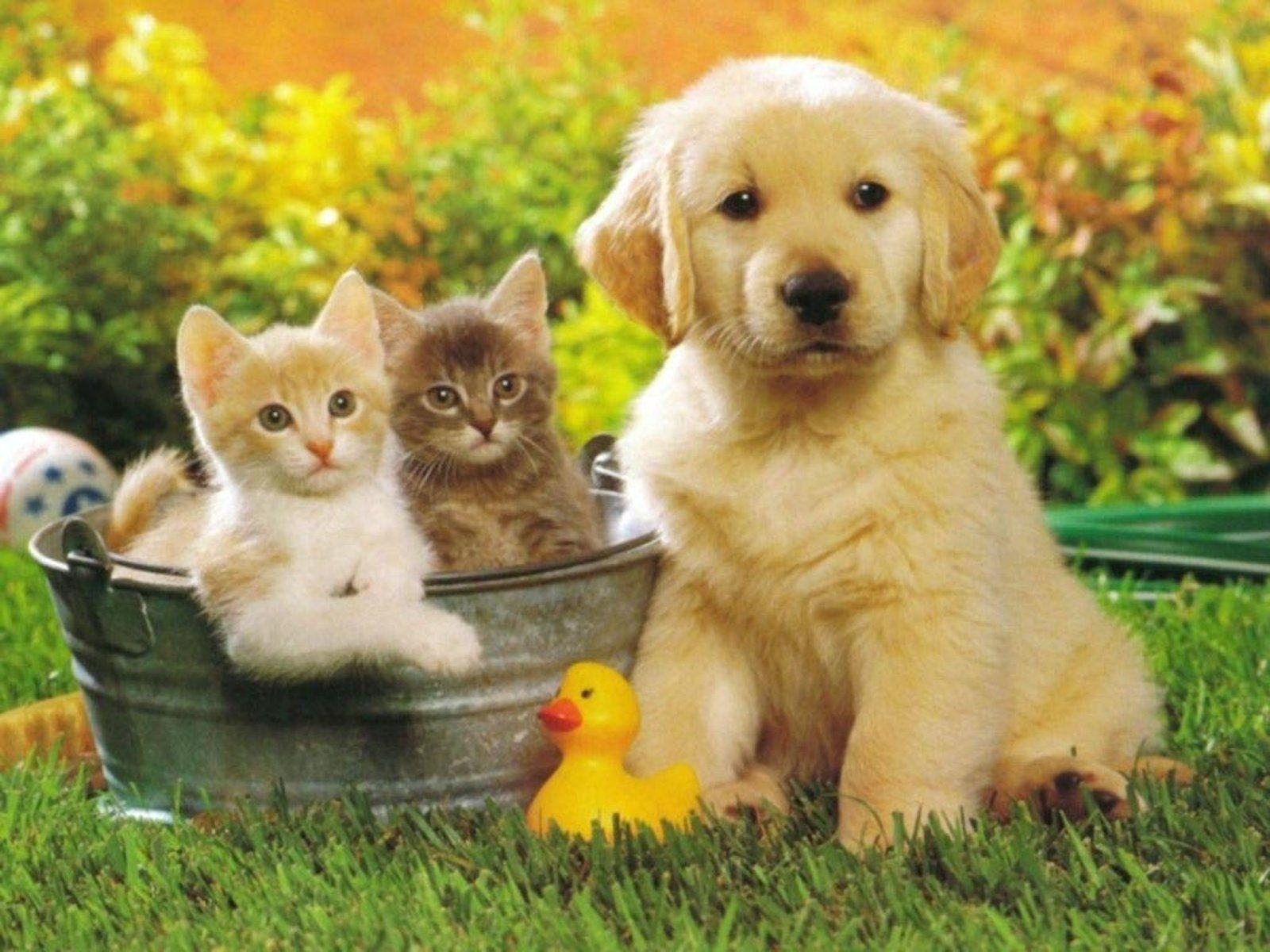 10 Top Puppies And Kittens Wallpaper FULL HD 1080p For PC Desktop