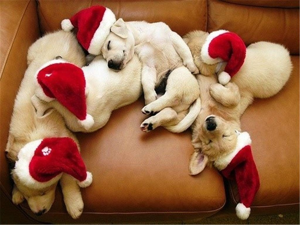 10 New Cute Puppy Christmas Pictures FULL HD 1920×1080 For PC Background 2020 free download puppy christmas wallpapers wallpaper cave 1024x768