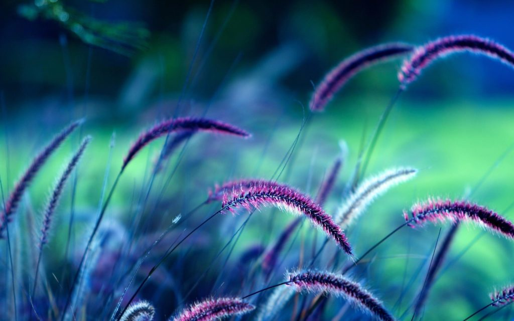 10 New Purple And Teal Wallpaper FULL HD 1080p For PC Background 2020 free download purple flowers 10327 art gallerie pinterest flower wallpaper 1024x640
