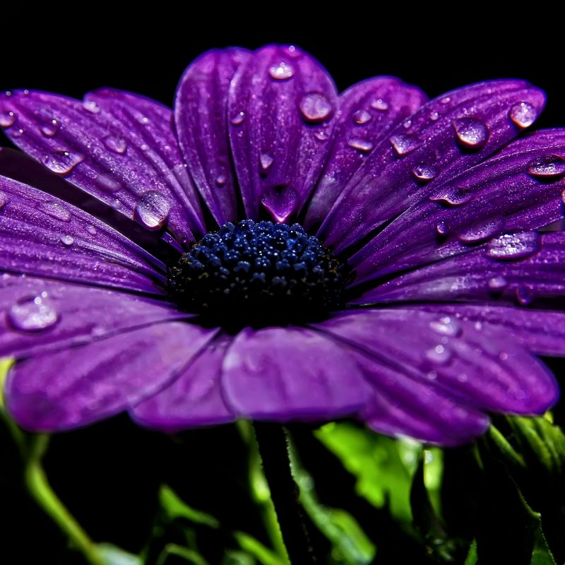10 Most Popular Pic Of Purple Flowers FULL HD 1080p For PC Background 2018 free download purple flowers 14034 2560x1600 px hdwallsource 800x800