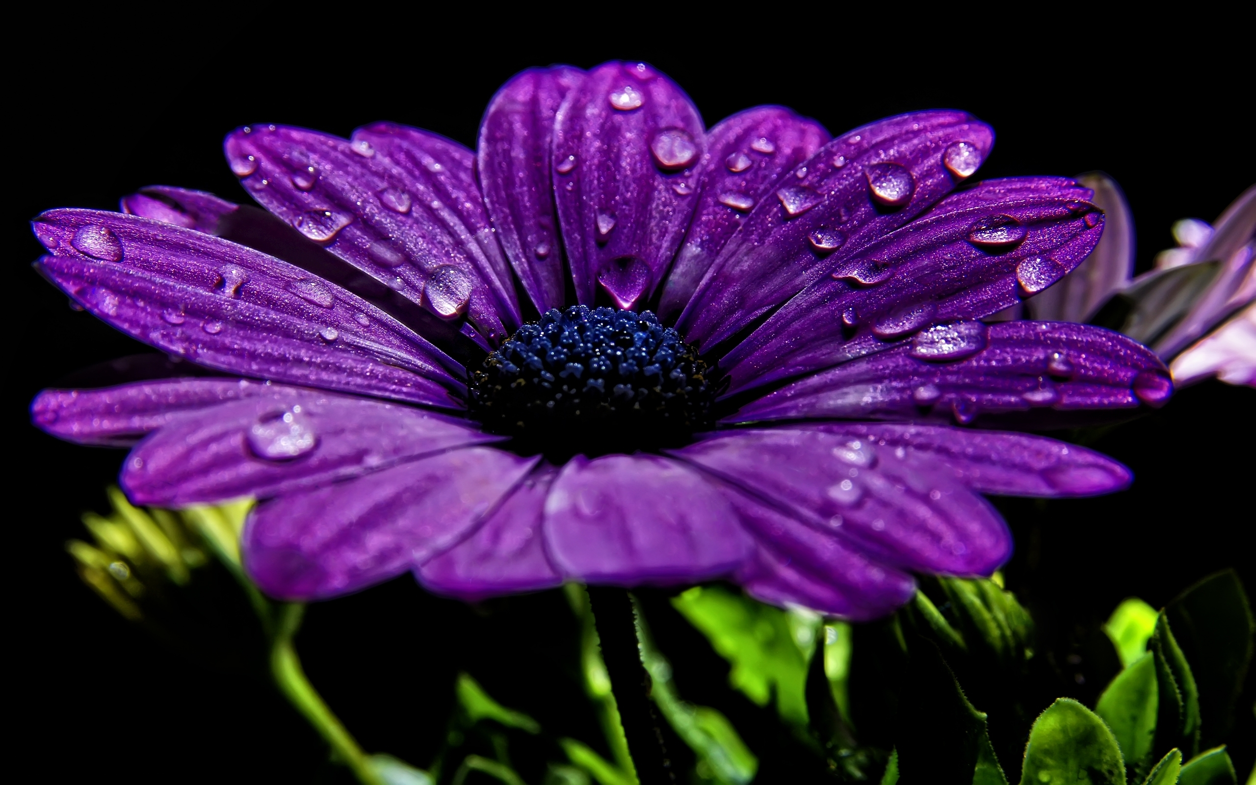 purple flowers 14034 2560x1600 px ~ hdwallsource
