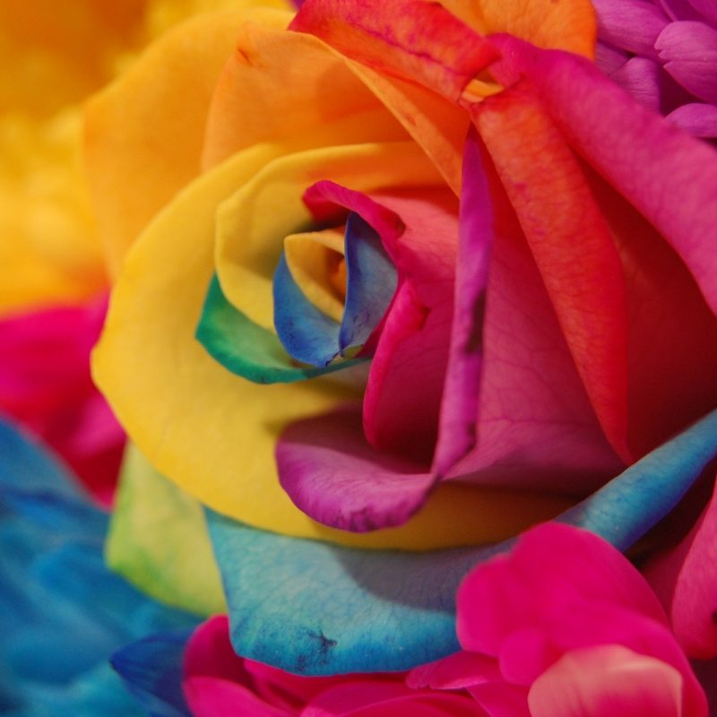 10 Best Rainbow Flower Wallpaper Desktop FULL HD 1920×1080 For PC Background 2018 free download rainbow flowers 17361 1600x1064 px hdwallsource 800x800