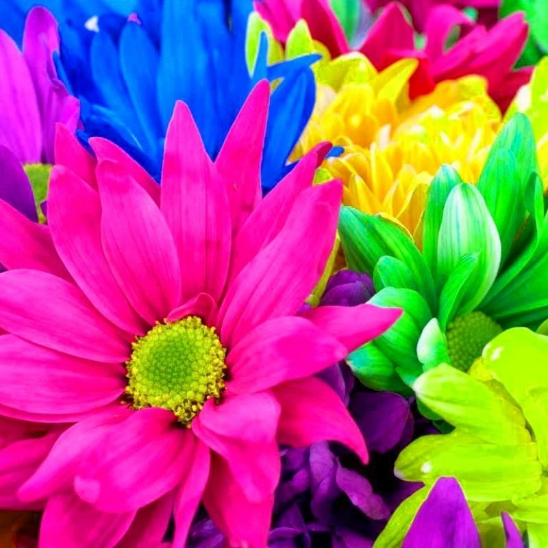 10 Best Rainbow Flower Wallpaper Desktop FULL HD 1920×1080 For PC Background 2018 free download rainbow flowers 17370 1024x768 px hdwallsource 800x800