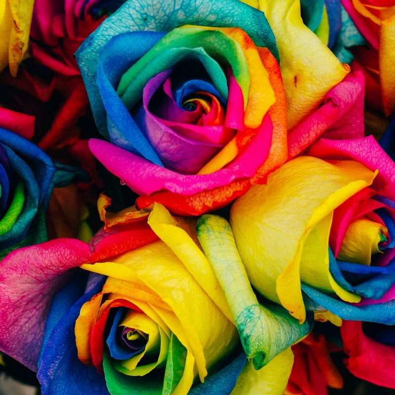 10 Best Rainbow Flower Wallpaper Desktop FULL HD 1920×1080 For PC Background 2018 free download rainbow roses wallpaper mobile desktop background 800x800