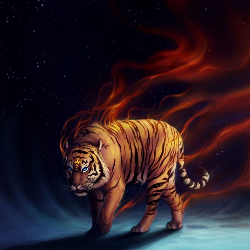 10 Latest Cool Pics Of Tigers FULL HD 1080p For PC Desktop 2020 free download really cool tiger art tigers curse pinterest tiger art 800x800