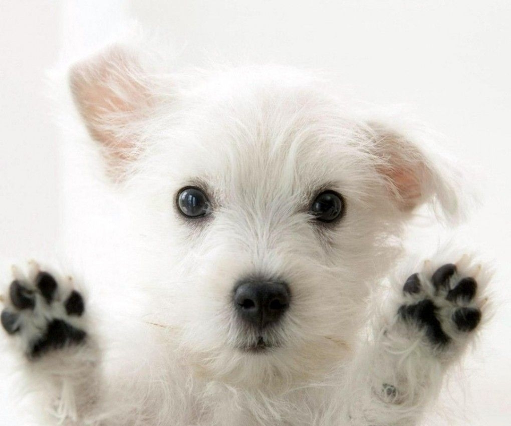 10 Best Dog Wallpaper For Android FULL HD 1920×1080 For PC Desktop 2018 free download really cute dogs cute dogs pinterest dog wallpaper and wallpaper