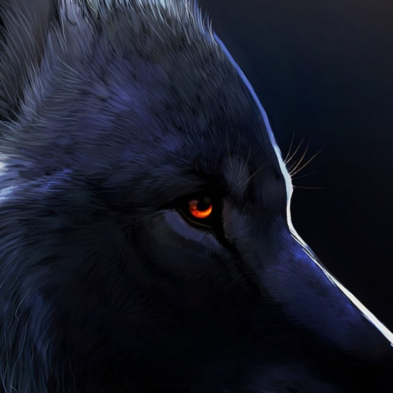 10 New Black Wolf With Red Eyes Wallpaper FULL HD 1080p For PC Desktop 2018 free download red eyed black wolf anything art pinterest red eyes wolf and 800x800