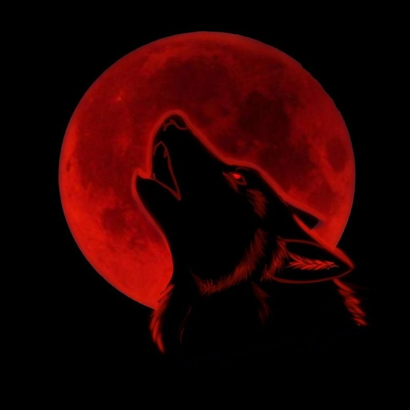 10 New Black Wolf With Red Eyes Wallpaper FULL HD 1080p For PC Desktop 2018 free download red moonnikathy spectacular moons pinterest red moon moon 800x800