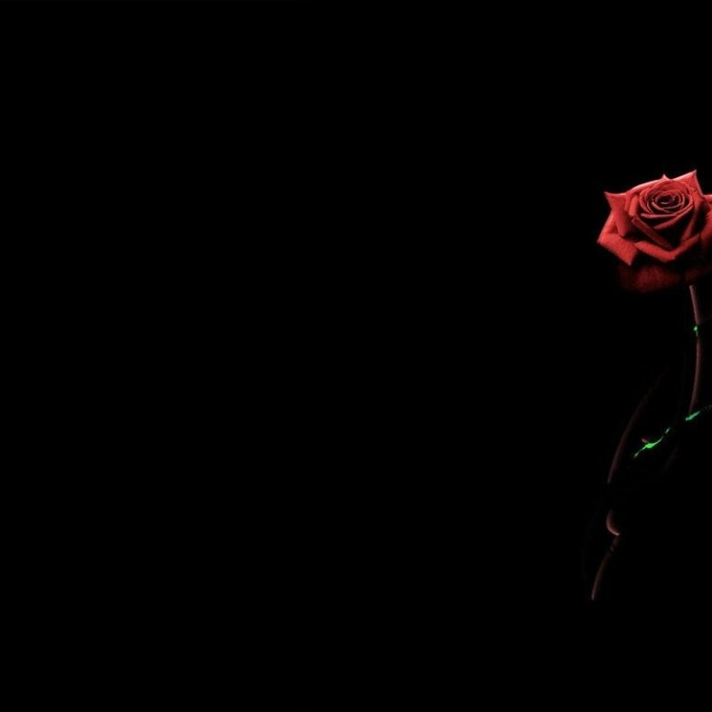 10 New Red Roses With Black Backgrounds FULL HD 1080p For PC Background 2018 free download red rose black background wallpaper google search pictures 800x800