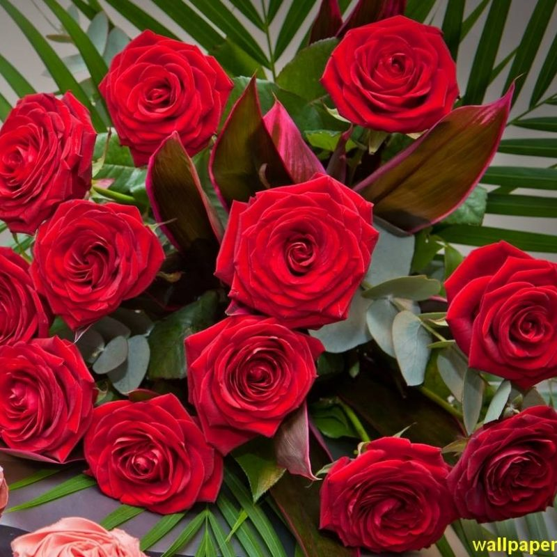10 Best Roses Wallpapers Free Download FULL HD 1920×1080 For PC Background 2020 free download red rose images free download stock flower images pinterest 800x800