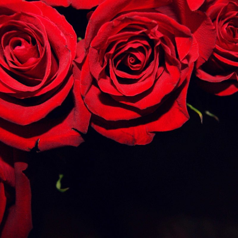 10 Best Roses On Black Background FULL HD 1920×1080 For PC Background 2018 free download red roses on black backgrounds wallpaper gallery with background 800x800
