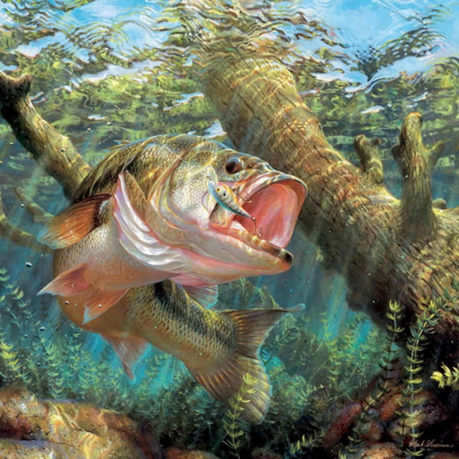 resultado de imagem para fish wallpaper   fishing   pinterest   fish