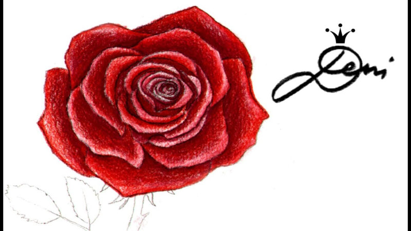 10 Most Popular A Rose Pic FULL HD 1920×1080 For PC Desktop 2018 free download rose farbig zeichnen lernen f09f8cb9 colorieren 2 f09f8cb9 how to draw a rose 800x450