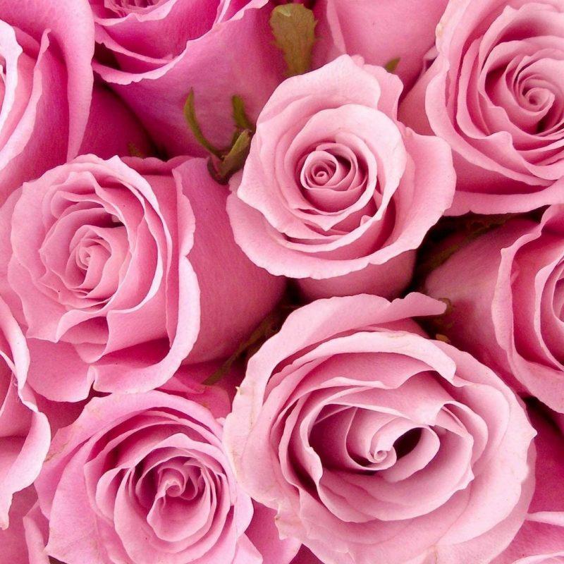 10 Best Pink Rose Wallpaper Hd FULL HD 1920×1080 For PC Background 2021 free download rose pink flower wallpaper hd 2018 cute screensavers 800x800