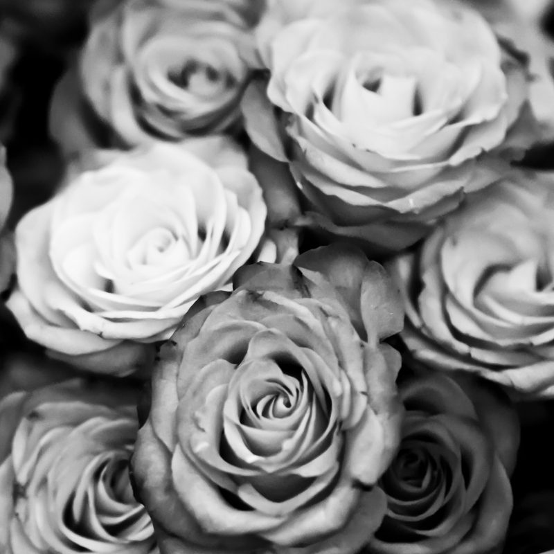 10 Best Black And White Roses Wallpaper FULL HD 1080p For PC Desktop 2018 free download roses black and white e29da4 4k hd desktop wallpaper for 4k ultra hd tv 800x800