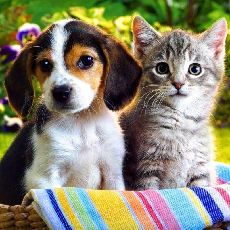 10 Latest Cute Puppy And Kitten Pics FULL HD 1920×1080 For PC Desktop 2020 free download rules of the jungle funny cute puppies and kittens 800x800