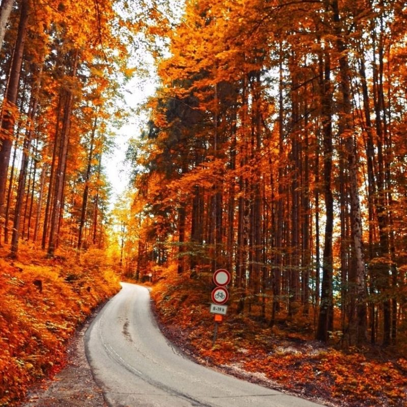 10 Top Images Of Fall Scenery FULL HD 1080p For PC Background 2018 free download rustic fall scenery pictures photos and images for facebook 800x800