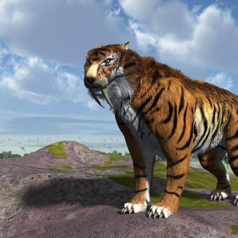 10 Best Saber Tooth Tiger Wallpapers FULL HD 1920×1080 For PC Background 2018 free download saber tooth tiger wallpapers wallpapers pinterest 800x800