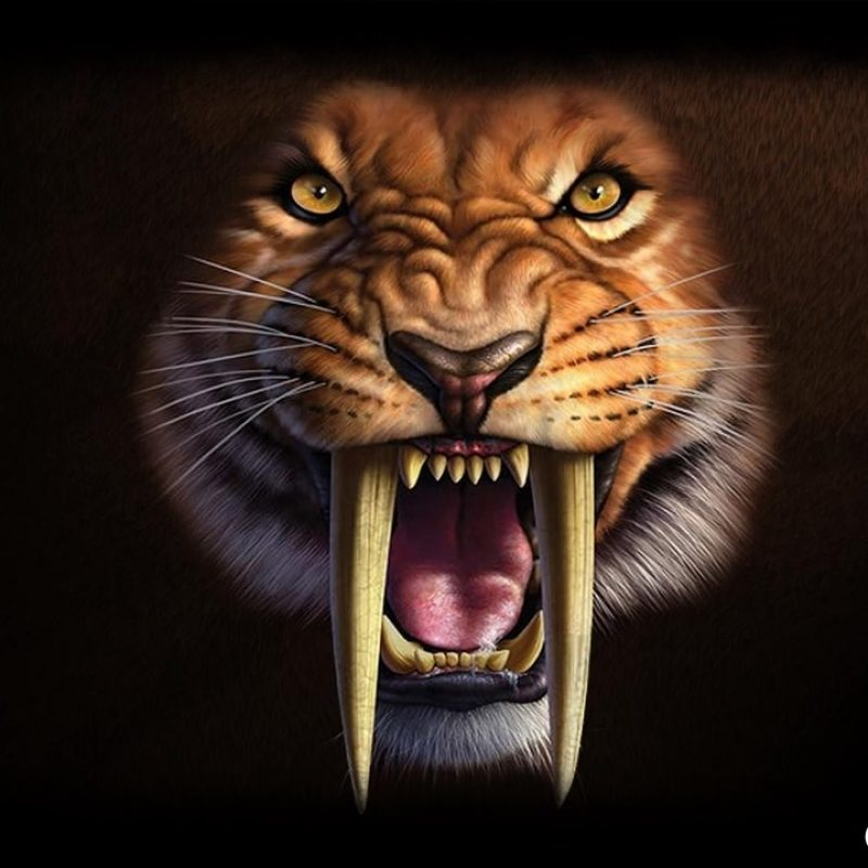 10 Best Saber Tooth Tiger Wallpapers FULL HD 1920×1080 For PC Background 2018 free download saber tooth wallpaper apk download free personalization app for 800x800