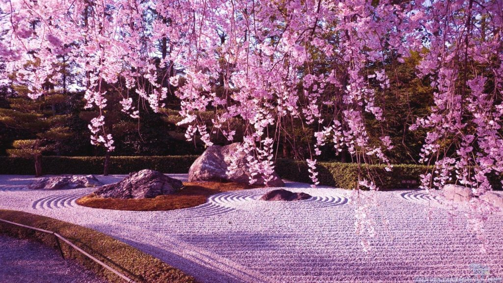 10 Best Cherry Blossom Japan Wallpaper FULL HD 1920×1080 For PC Desktop 2018 free download sakura flower wallpapers wallpaper cave 1024x576