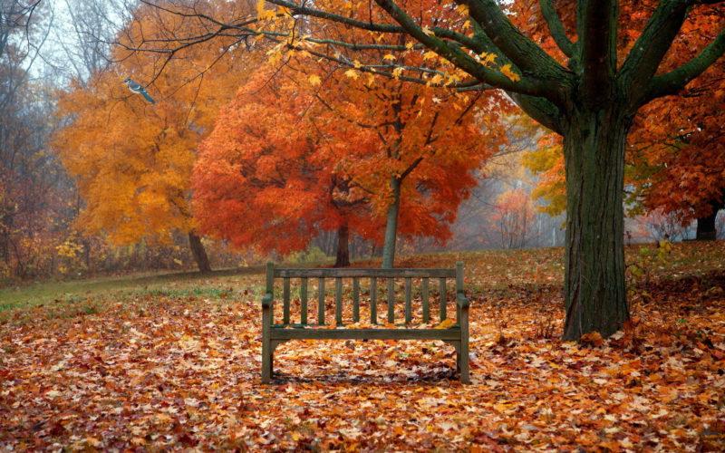 10 New Autumn Scenes Wallpaper FULL HD 1080p For PC Background 2018 free download scenes of autumn desktop wallpaper 800x500