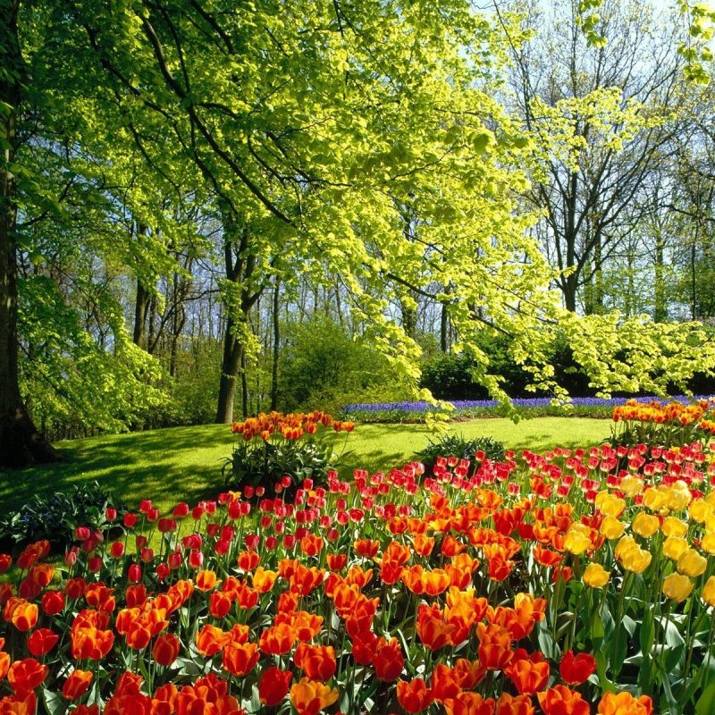 10 Best Free Spring Desktop Backgrounds FULL HD 1920×1080 For PC Background 2020 free download screensavers and backgrounds ventube tulip field in spring 800x800