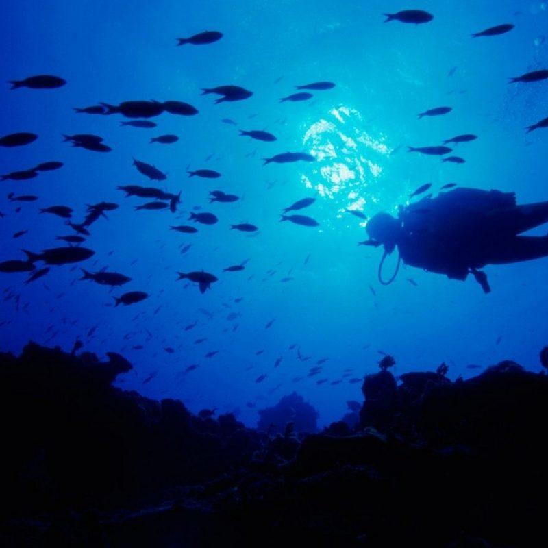 10 New Scuba Diving Desktop Backgrounds FULL HD 1080p For PC Background 2020 free download scuba diving 747795 walldevil 800x800