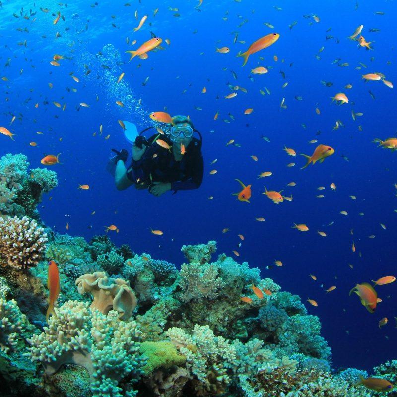 10 New Scuba Diving Desktop Backgrounds FULL HD 1080p For PC Background 2020 free download scuba diving diver ocean sea underwater fish wallpapers 5184x2904 800x800